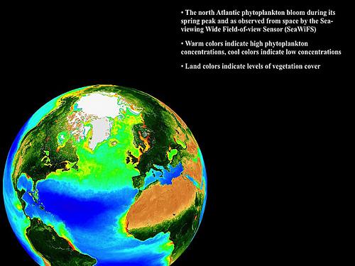 planktonworldoceans