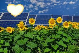 solarsoularpanelswithsunflowers